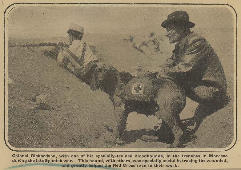The success of Major Richardson's dogs in earlier Red Cross campaigns helped to convince the British Government that trained dogs should form part of Britain's military forces.